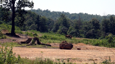 forest being denuded of trees