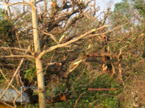 branches broken, trees safe 2