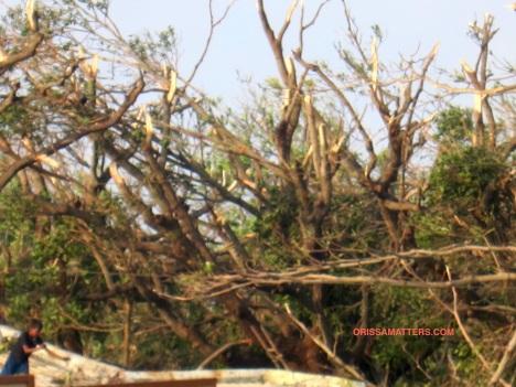 branches broken, trees safe
