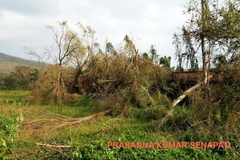 Photo from Prasanna