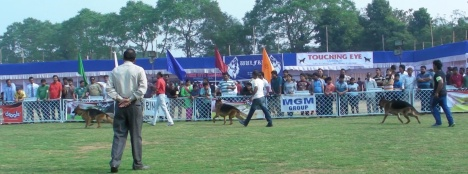 GSDs in Bhubaneswar Dog Show 2014 B